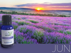 Lavender Essential Oil – SandyEssence for July