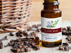 Clove Bud Essential Oil – November's SandyEssence